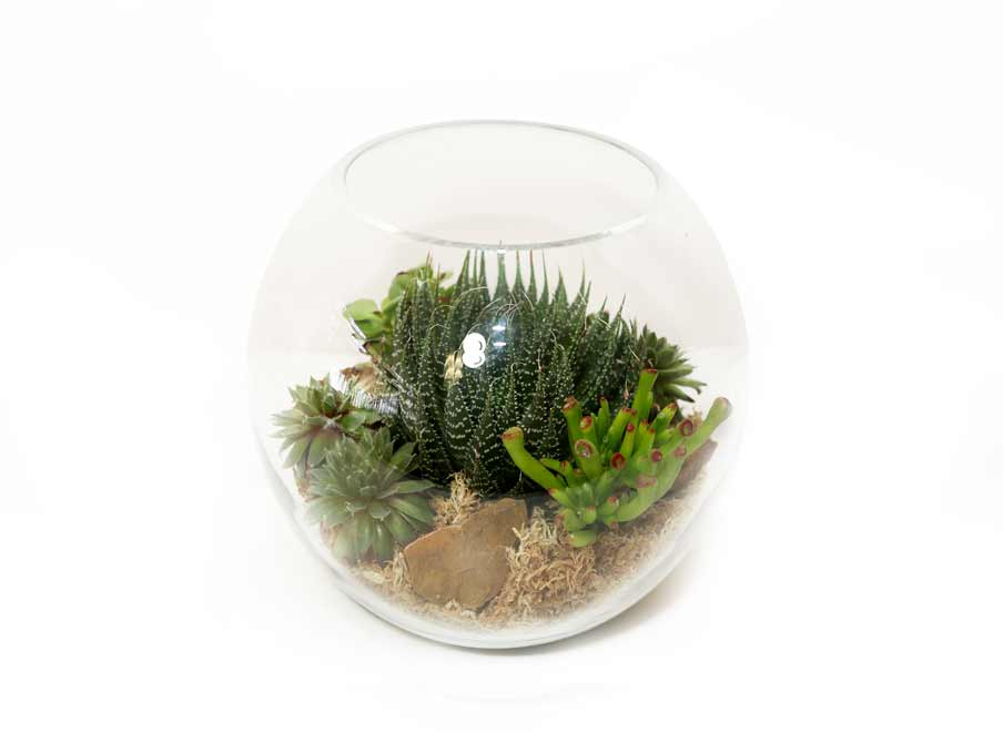 Fish bowl terrarium perth succulent bowls for How to make a fish bowl