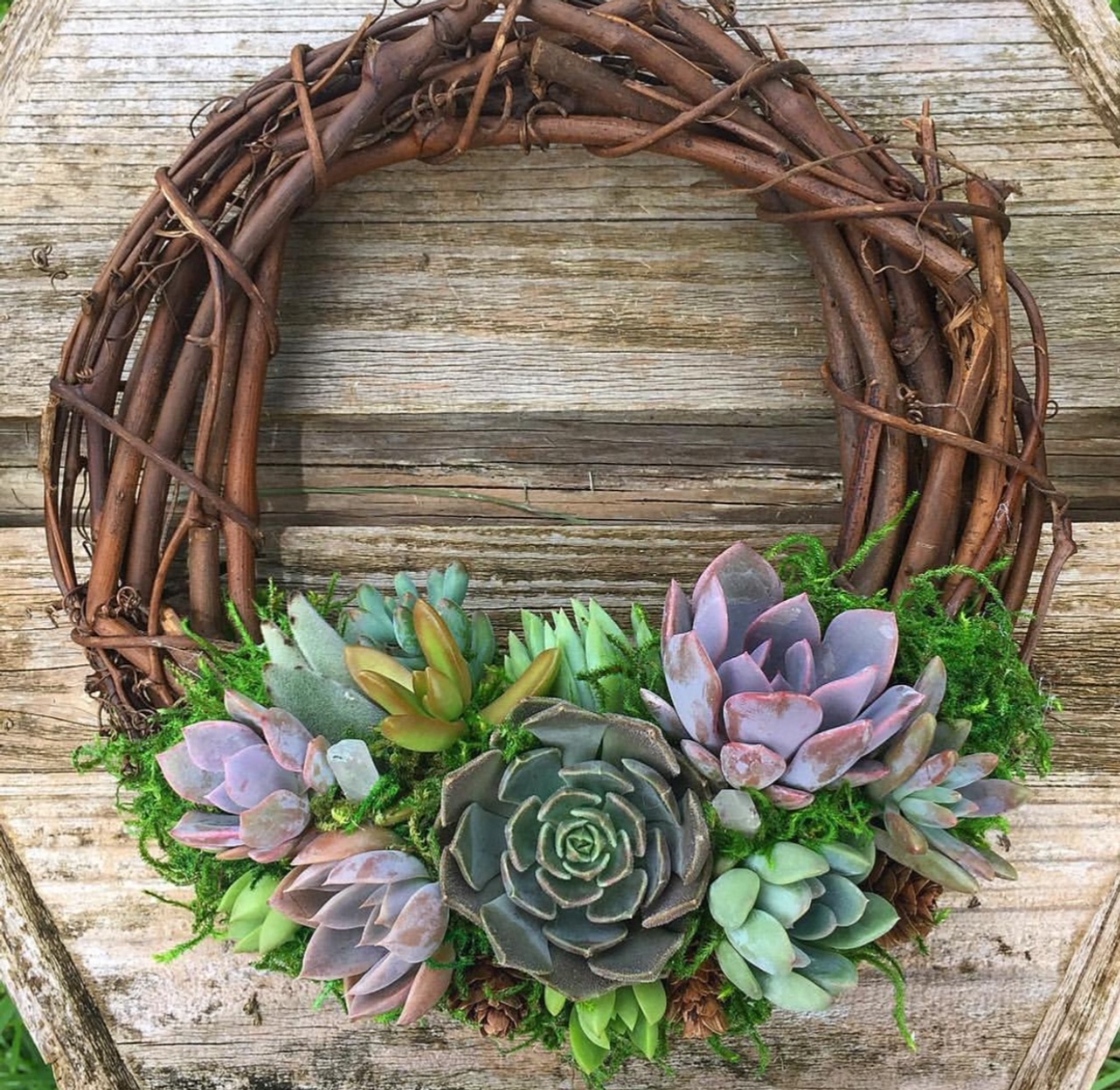 Grape Vine Succulent Wreath Perth Succulent Bowls